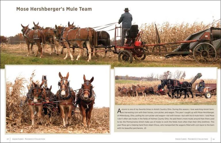 Mose Hershberger's Mule Team